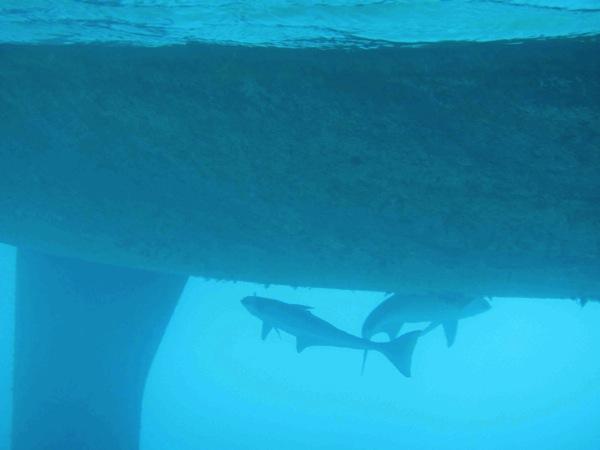 Shark! (5/6)