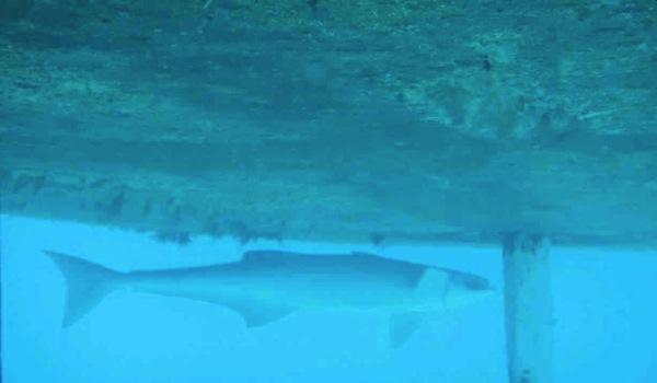 Shark! (1/6)