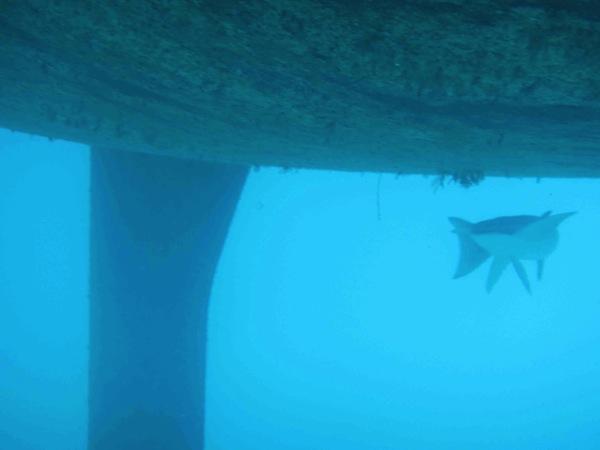 Shark! (2/6)