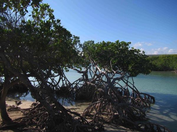 Gilligan s Island 1