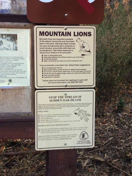 Mountain Lions