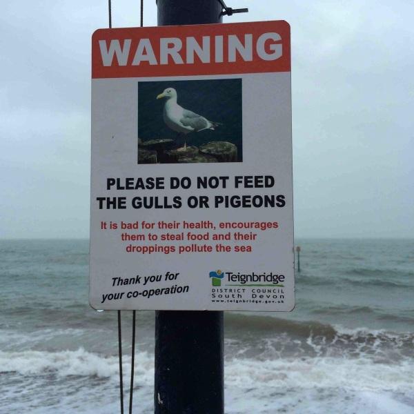 Naughty Gulls