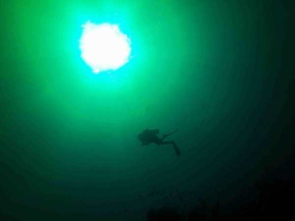 Arty Farty Cool Diving Photo 2