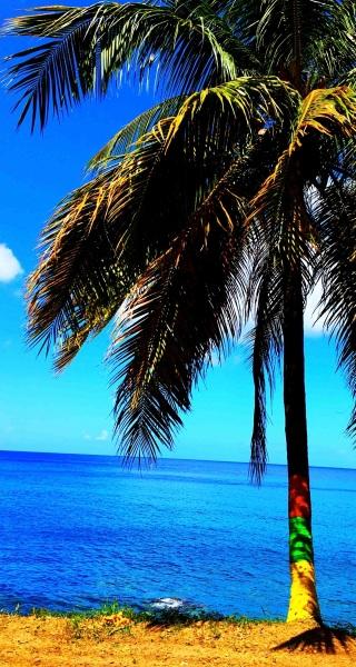 Arty Farty Patriotic Palm Tree