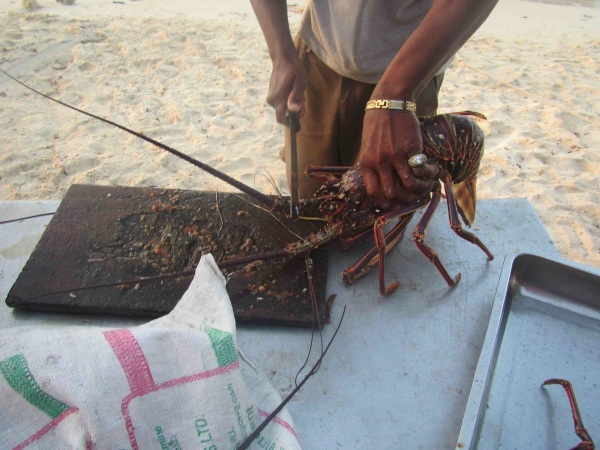 Lobster  Before