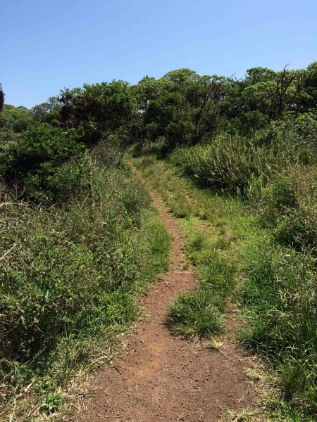 Isabela Path