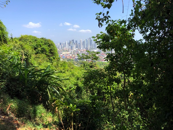 City In A Jungle