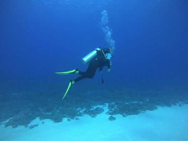 Diving  Lyn