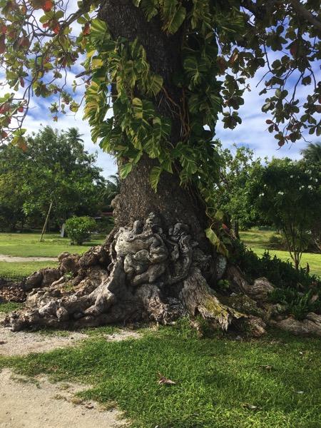 Fakarava  funny tree 2