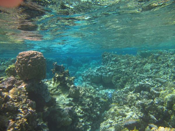 Coral garden 3