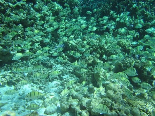 Fish Swarm 2