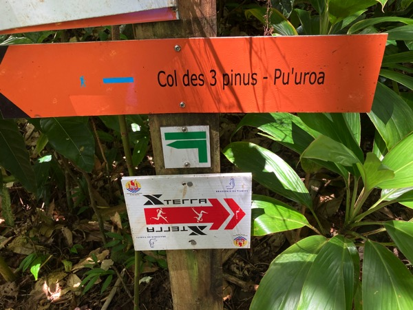Hike 3 Pinus