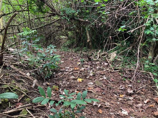 Hike Road 4